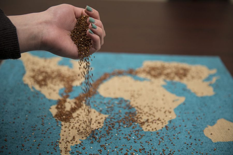 Moral questions raised by first world countries' mass importation of quinoa when the seed rose to fame as a health 'superfood' around 2011 focused consumer attention on the people who would exist beyond the shelves of their local supermarket. | Olivia Blinn/THE CHIMES
