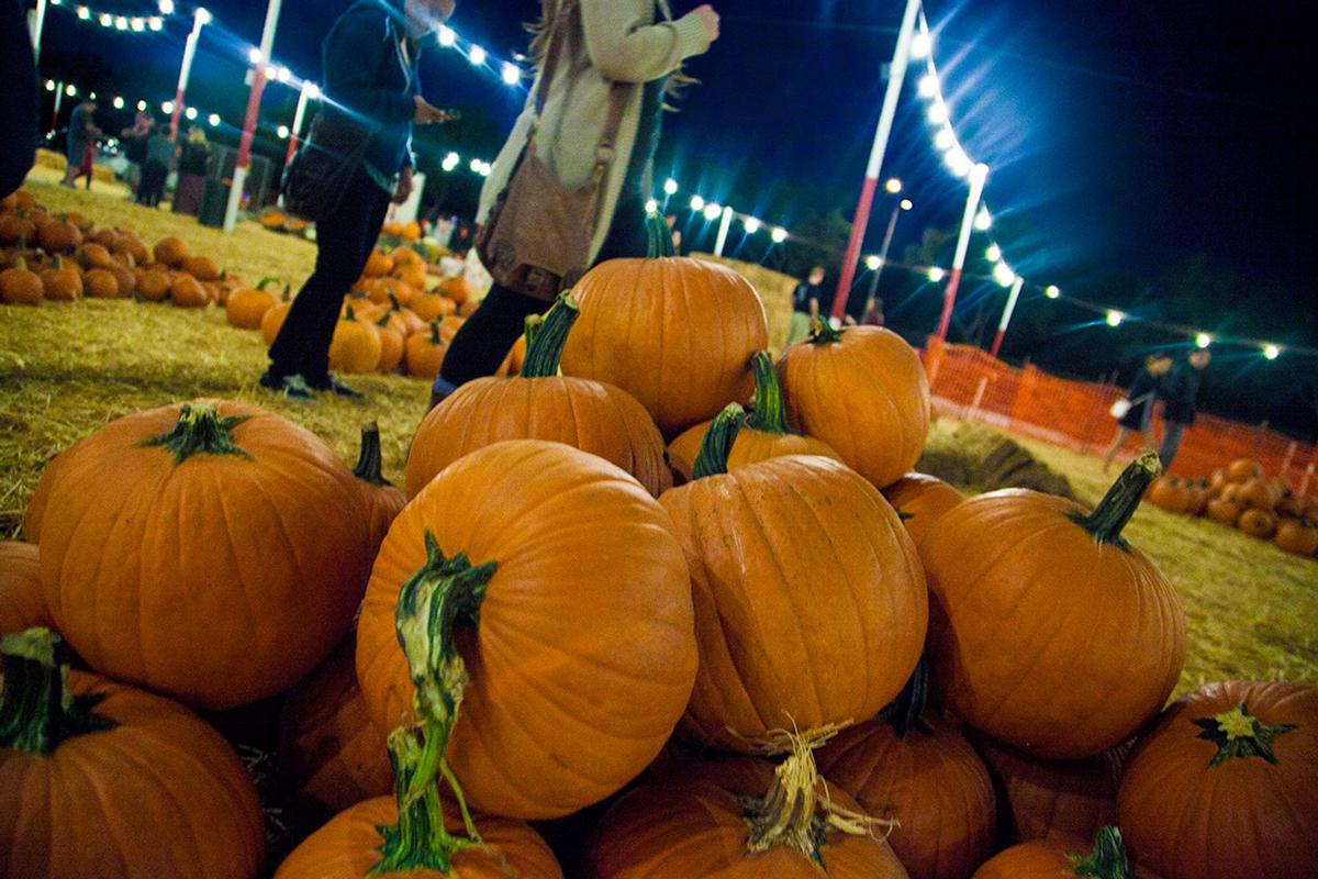 Midterm madness: Take a break with fun fall festivities