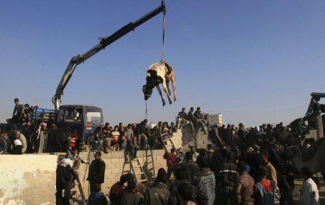Egypt takes steps to close Gaza border as bulldozer wrecks new section of border fence