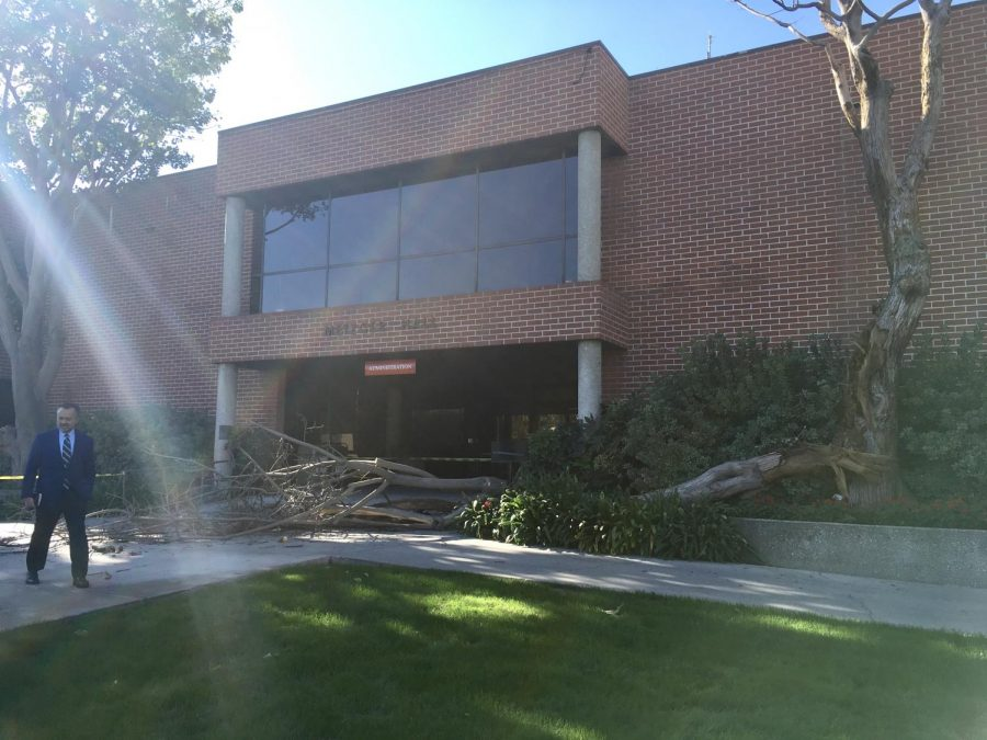 workplace, Metzger Hall, after a tree fell in front the building on the morning of Nov. 9.