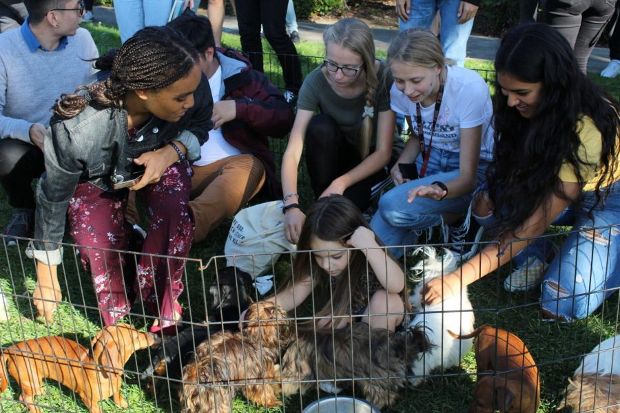Students+participate+in+the+Wellness+Walk+by+attending+the+puppy+patch+at+Torrey+Conference.
