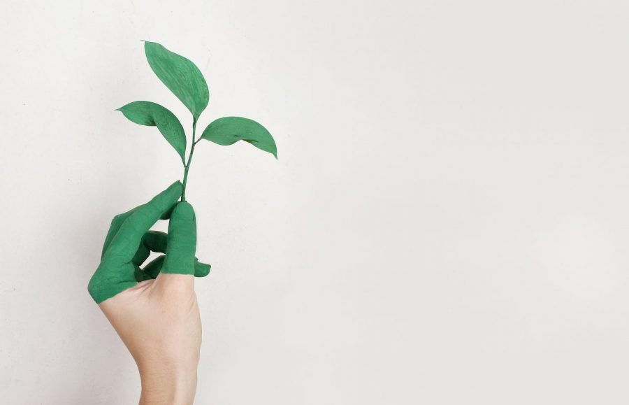 Thinking green and reducing waste, helps with having a more sustainable life.