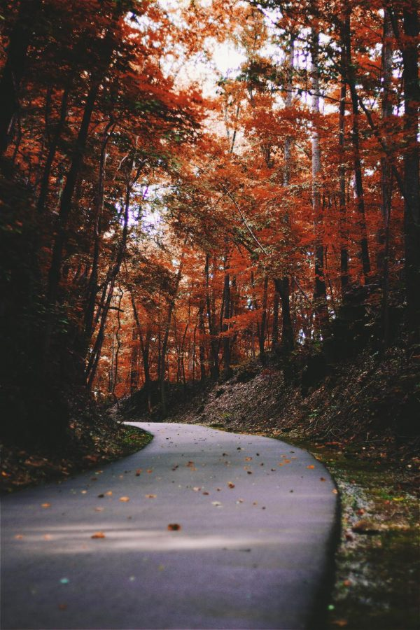 Songs that will transport you to autumn